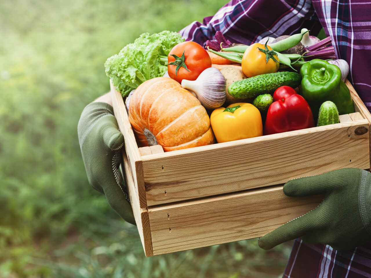 Farmer holds in his hands a wooden box with a vegetables produce on the background of the garden. Fresh and organic food. (Farmer holds in his hands a wooden box with a vegetables produce on the background of the garden. Fresh and organic food., ASCII