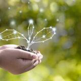 Nachhaltigkeit pflanzen